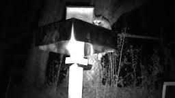 29 Best Images About Raccoon And Possum Proof Cat Feeders