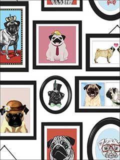 A Pug's Life Multi Wallpaper 11360 by Sancar Wallpaper