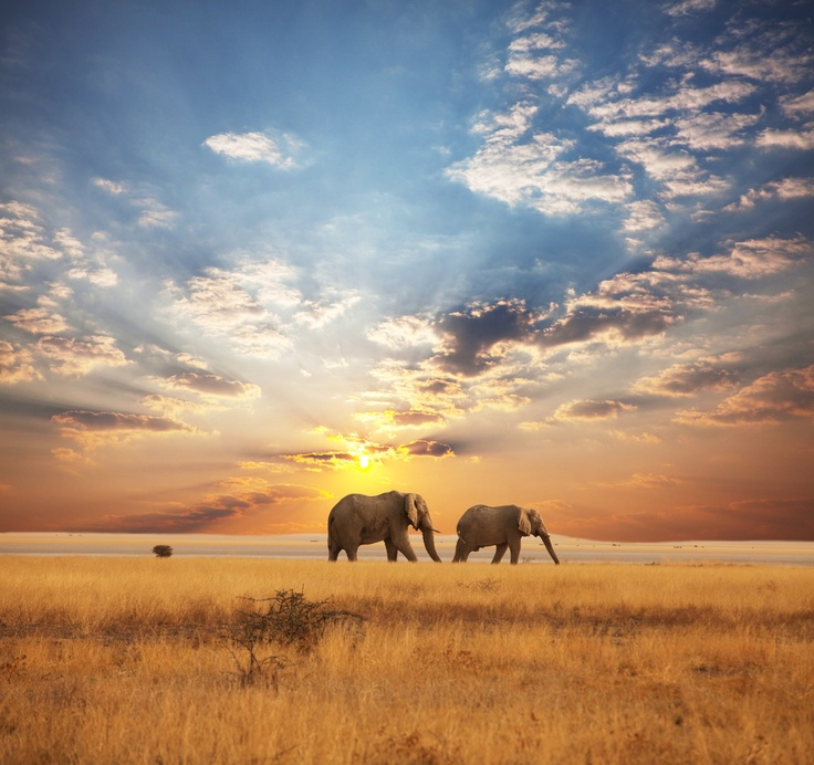 Take a safari and see the elephants in Africa! - http://flightsafrica12.blogspot.com/2015/08/plane-tickets-africa.html