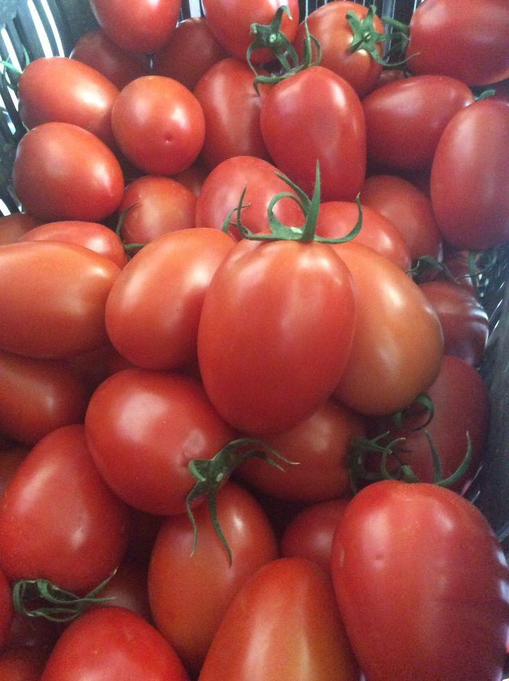 Tomates saladette de productor oaxaqueño Edgar Paz .....calidad de exportación