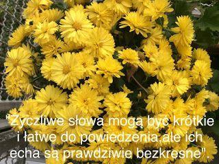 Jovia: Humor szkolny - 1