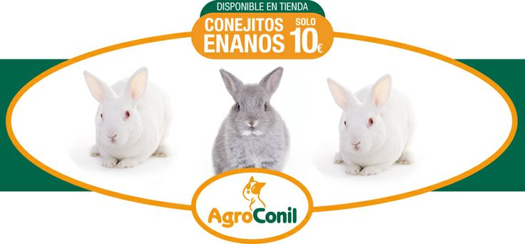 Comenzamos felices la semana!!!  Han nacido en Agroconil  seis conejitos enanos y ya estan a la venta.  Son cinco blancos y uno grisáceo y su precio es de solo 10€.  Ven a verlos, no te resistirás… son monísimos!!!