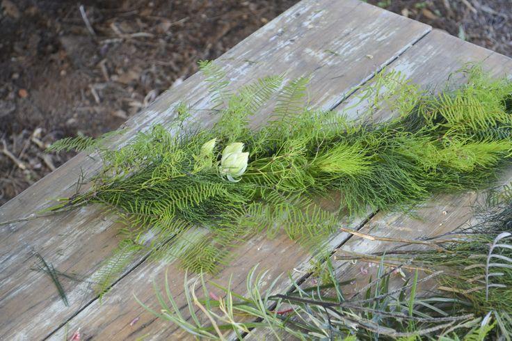 Sea star fern, Bribie pine, Koala fern, Goanna claw and Serruria blushing bride