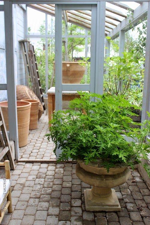 Piazzan: Växthus på Zetas finsmakarens trädgård #piazzan #zetasträdgård #trädgård #garden #pelargonia  #krukor #växthus #photobypernilla