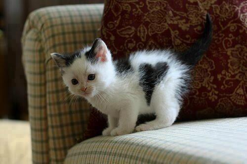 Heart Kitty.
