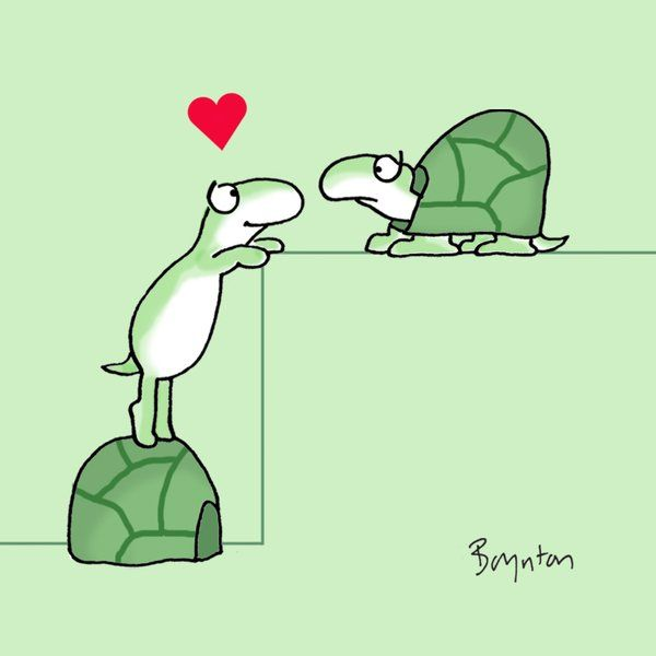 Sandra Boynton (@SandyBoynton) | Twitter May 23 Is Turtle Day.