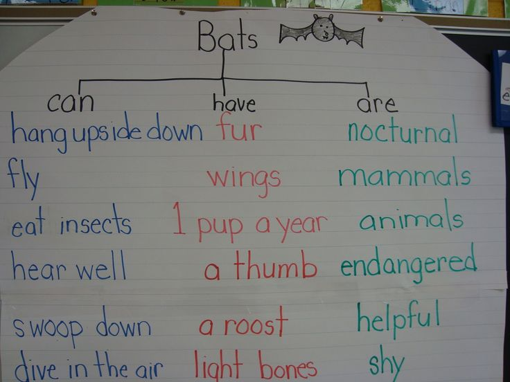 comparing bats and stellaluna | ... bats in our classroom this month we read stellaluna and then compared