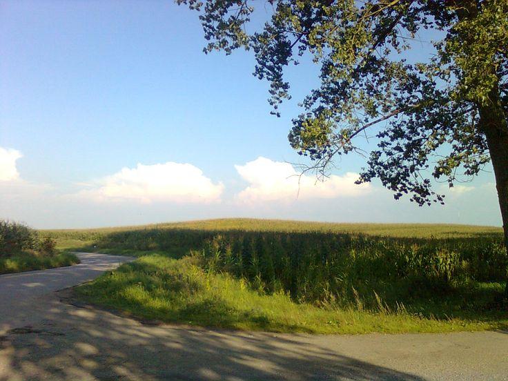 Pole kukurydzy jadąc ze Staświn do Lipowego Dworu na wysokości Staświny-Osada. Kiedyś na górce był spory bunkier, ale został zrównany z ziemią.
