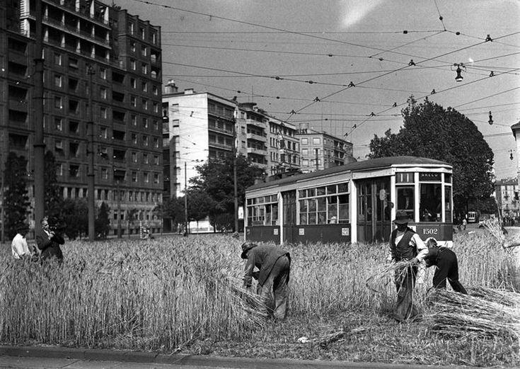 La raccolta del grano in piazzale Fiume (ora piazza della Repubblica) nel 1942 (Archivio Corriere)