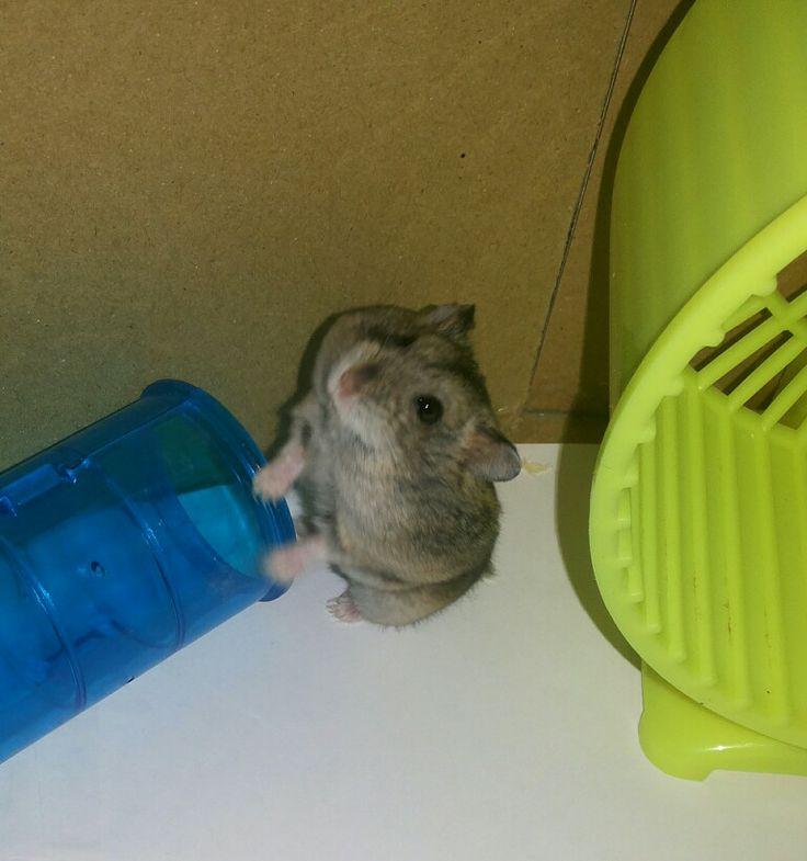 Jono si hamster