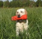 These different labrador types were bred for different purposes. One of the major differences between these 2 types of labs is their build. While American labs are thinner, English labs are stockier. Check the other differences between these lab types in the excerpt below: The American Labradors, also known as 'Field' or 'Hunting' Labradors, originated …