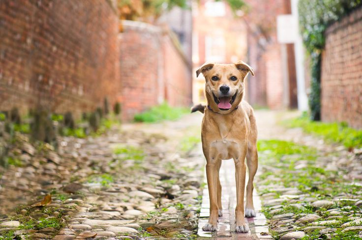 As one of America's top dog friendly cities, Alexandria, Va. offers dog lovers no shortage of dog parks, dog boutiques, dog friendly hotels and more.