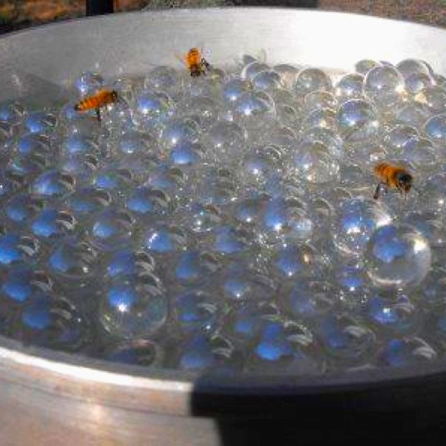 Bee water... Put marbles in water for a safe place for bees to drink! Very cool!! www.justintrails.com