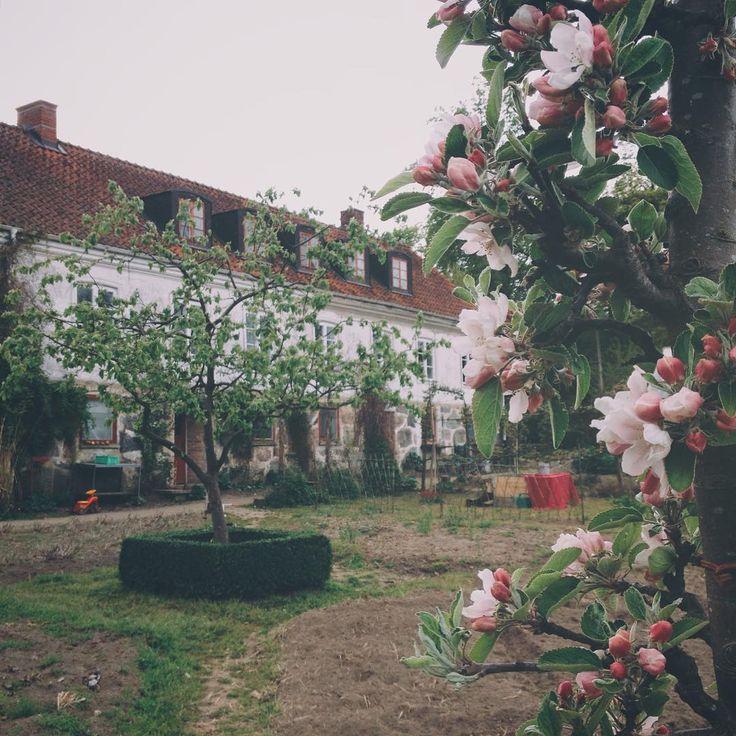 Жизнь на эко-ферме Mandelmanns Trädgårdar в шведской провинции Сконе. Ферму можно посетить для прогулки или обеда в кафе в саду. Запишите адрес:  Djupadal, Rörum, 27295 Simrishamn, Sweden http://mandelmann.se/