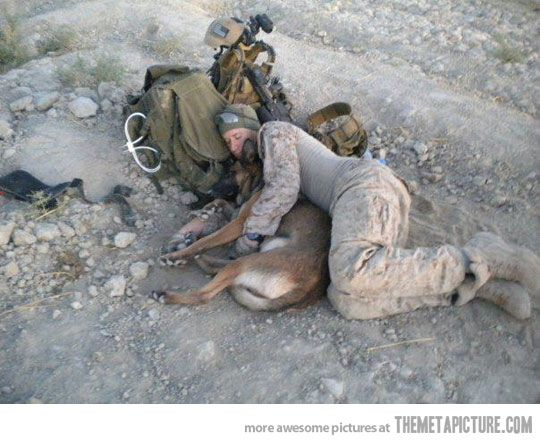 Everybody needs someone to cuddle with - even MarinesMilitary Dogs, Heart, God, Soldiers, Heroes, Best Friends, Marines, Animal, Work Dogs