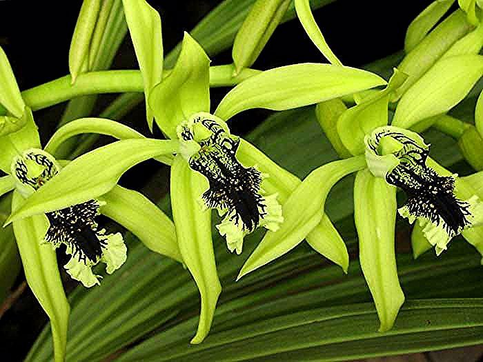 Anggrek In 2020 Beautiful Orchids Orchid Plants
