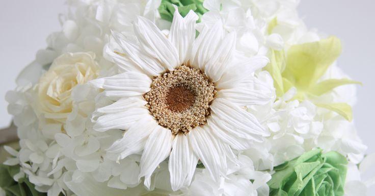 Sunflower. Girasol
