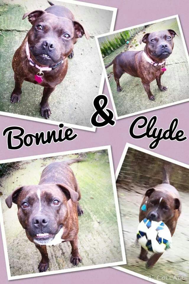 Adopt A Rescue Dog Sheffield