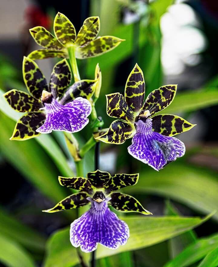 Orquídea,  by Moacir Chiarello