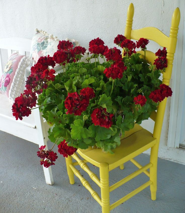charming chair with a cracked seat is rescued! used as a plant stand :)