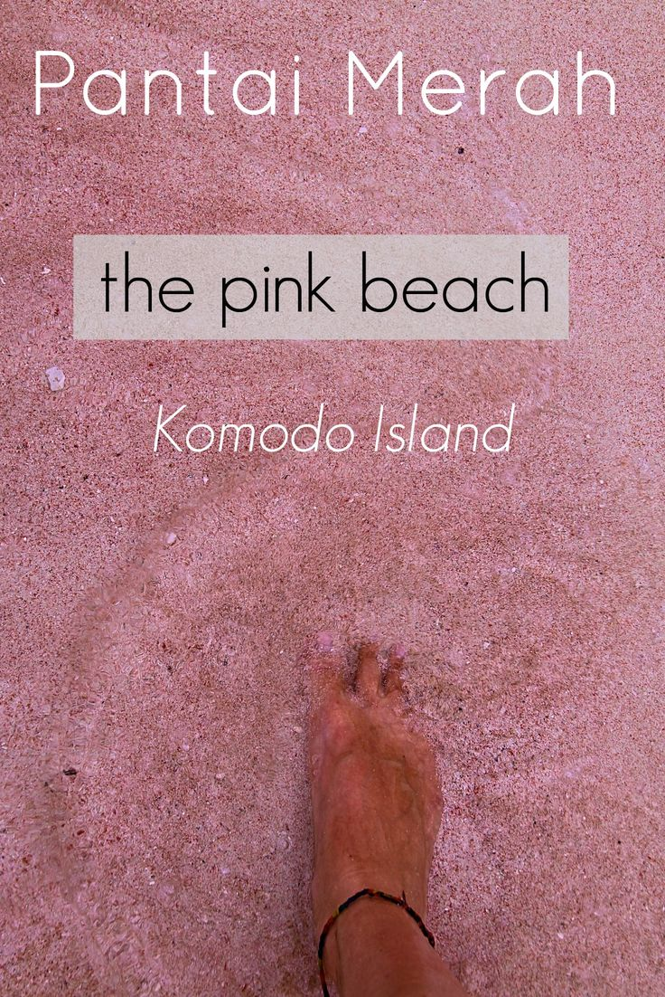 Pantai Merah - The pink beach of Komodo Island