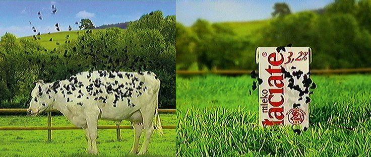 "Reklama mleka ""Łaciate"", fot. fot. Agencja Wasilewski"