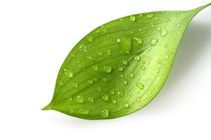 Leaf Image(http://www.clker.com 2013)