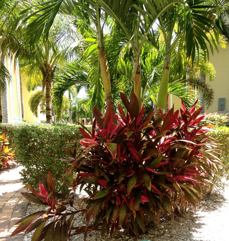 310 best images about xeriscape low maintenance on for Low maintenance tropical plants