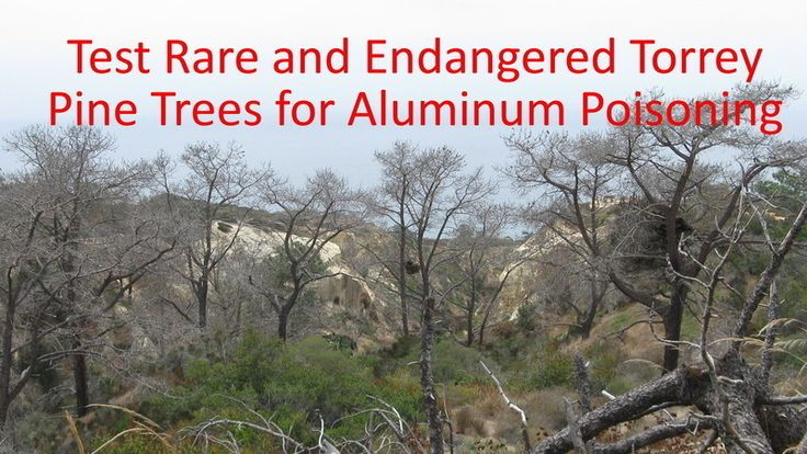 Ask California State Parks to Test Torrey Pine Trees for Aluminum Poisoning