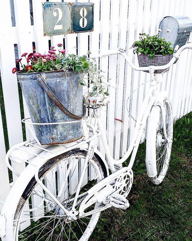 """~ ♡ SYKKEL GLEDE ♡ ~ Nå har den slitne gamle sykkelen min, kommet opp fra kjelleren...Nå kan du få stå her og """"blomstre"""" i sommer  #sykkel #blomster #mestergrønnblomster #tusenfryd  #hagegleder #tradgard #hagelivoguterom #gammelsykkel #bike #nostalgi #lantliv #levlandlig #homes_norway #boligdrøm #vår #spring #snipetorp #sjarm #gjenbruk #återbruk #rustic #decoration #norskehjem #norgeshjem #romantisk"""