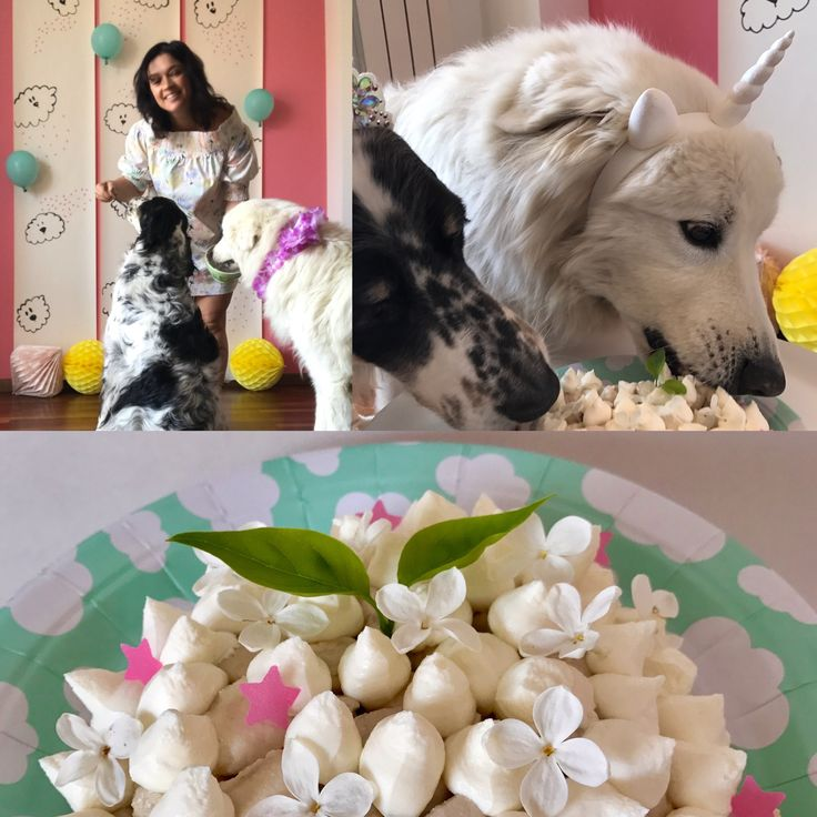 Happy Birthday White Mountain #petchef #dogparty #unicorndogparty #kikipelosi #petpartyplanner #dogfood #unidog #dogcake #organicpetfood #petparty #englishsetter