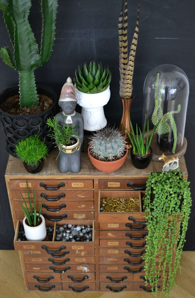 look! pimp your room: Urban Jungle Bloggers: My Plant Gang: