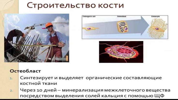 кости и суставы  продукты 3д компании Новосибирск