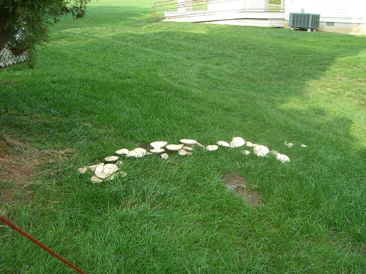 It is called a Fairy ring