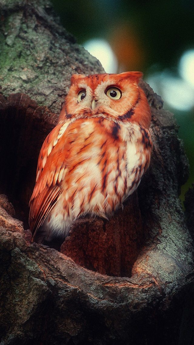 A Stunning Owl in an Amazing Tree!