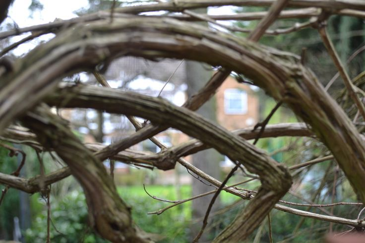 depth of filed of branch