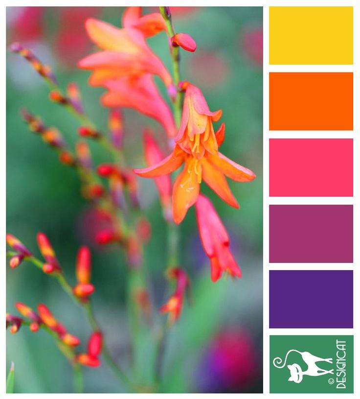 Lucifer - Yellow, Orange, Pink, Purple, Green - Designcat Colour Inspiration Board