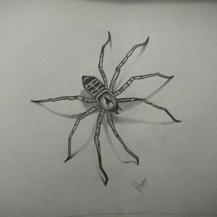 Spider walk on my drawing at night..
