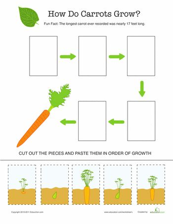Life Cycle of a Carrot- Spring, gardening, file folder worksheet
