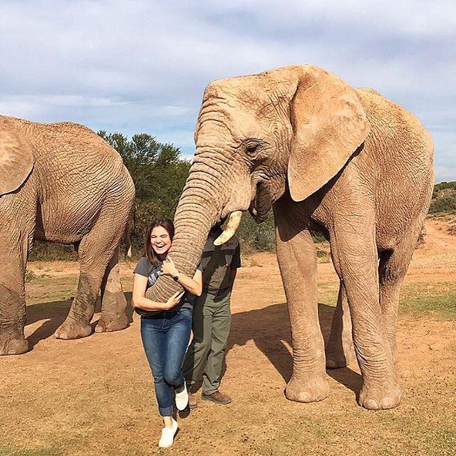 """Hoje é dia de safári bebê! Passe as fotos da galeria pra ver . Nossa editora de lifestyle @allinedauroiz foi passear com os elefantes do santuário Buffelsdrift Game Lodge a cerca de 4 horas de Cape Town. Lá é possível caminhar ao lado de 3 elefantes africanos (que vivem livres) dar comida na boca deles e ainda ganhar um abraço de elefante no final (eles nos envolvem com a tromba ! ). O passeio só é feito 3 vezes ao dia. Esse da foto é o Bulelo macho de 15 anos cujo nome significa """"Obrigado""""…"""