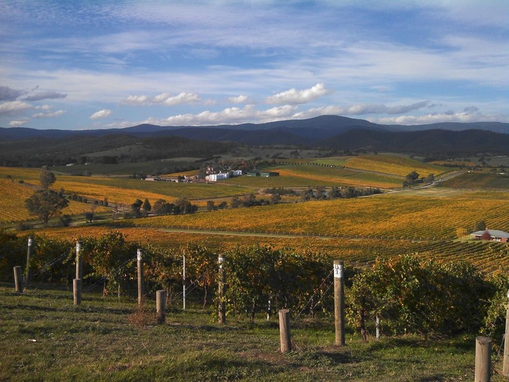 Autumn in the Yarra Valley. Stunning vistas and colours at this time of year. I just love it