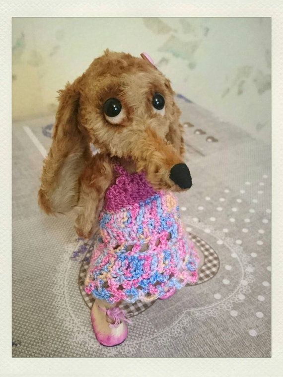 Teddie dachshund Lisa A wire-haired aromated от Cosydachshund