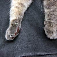 For a cat with claws, any piece of your furniture may seem like the perfect scratching post, including your favorite leather chairs. Instead of hiding those claw marks under a throw blanket or placing the furniture in a seldom-used room so guests don't see it, **repair the scratches, scrapes and punctures with a liquid-based leather repair...