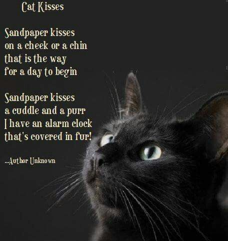 Love this...one of my cats used to give me kisses at the base of my nose every morning...I miss that ball of fur