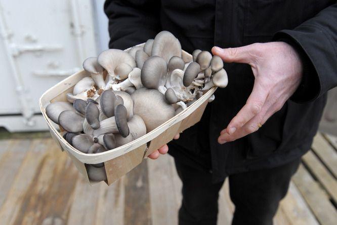 Mennyi a tápanyag a gombában?