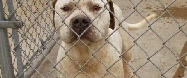 """La vicenda risale ai primi di febbraio: un uomo, in Tennessee, abbandona  al canile il proprio cane perché pensa sia omosessuale. Il cane in questione viene poi incluso nella lista degli """"esuberi"""" e la sua eutanasia programmata per la mattina successiva. Una veterinaria, Stephanie Fryns, lo nota tra le foto pubblicate sul sito del canile e lo adotta qualche ora prima che il web si mobili per salvarlo da morte certa. Qui l'annuncio facebook ancora visibile."""