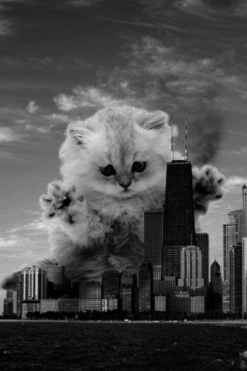 Run for your lives! It's Catzilla!!!!!!