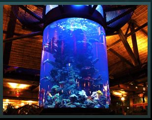66 best fish tanks made by atm images on pinterest fish for Fish tank show