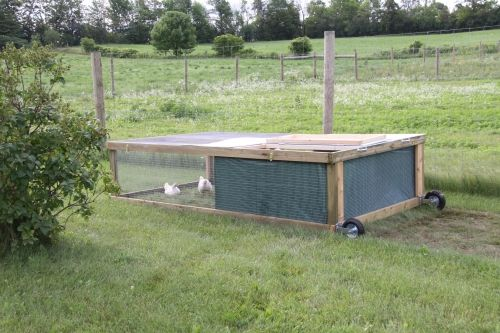 1000 images about around the farm on pinterest gardens for Big chicken tractor