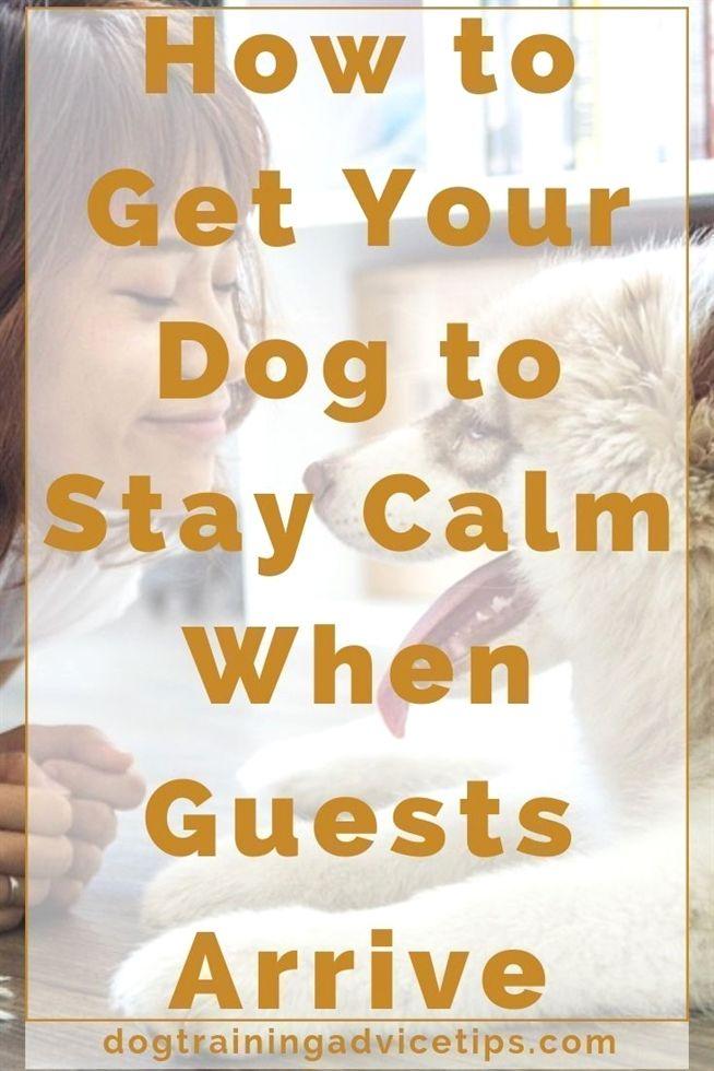 Dog Training Is Petsmart Dog Training Prices Dog Training 85032